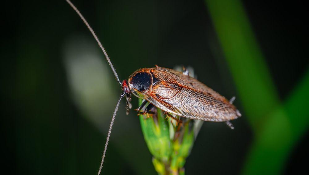 Cucaracha posada en una hoja