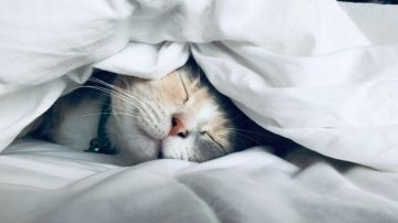 Cuidado con las siestas largas