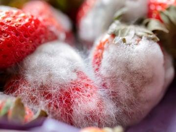 Fresas con pelo