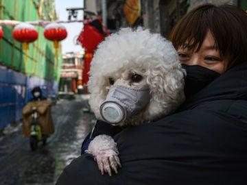 Un perro en Pekín con máscara, al inicio de la crisis del coronavirus