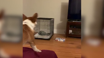 VÍDEO: Un perro se pelea con la televisión