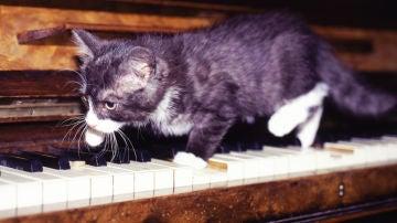 ¿La música amansa a las fieras?