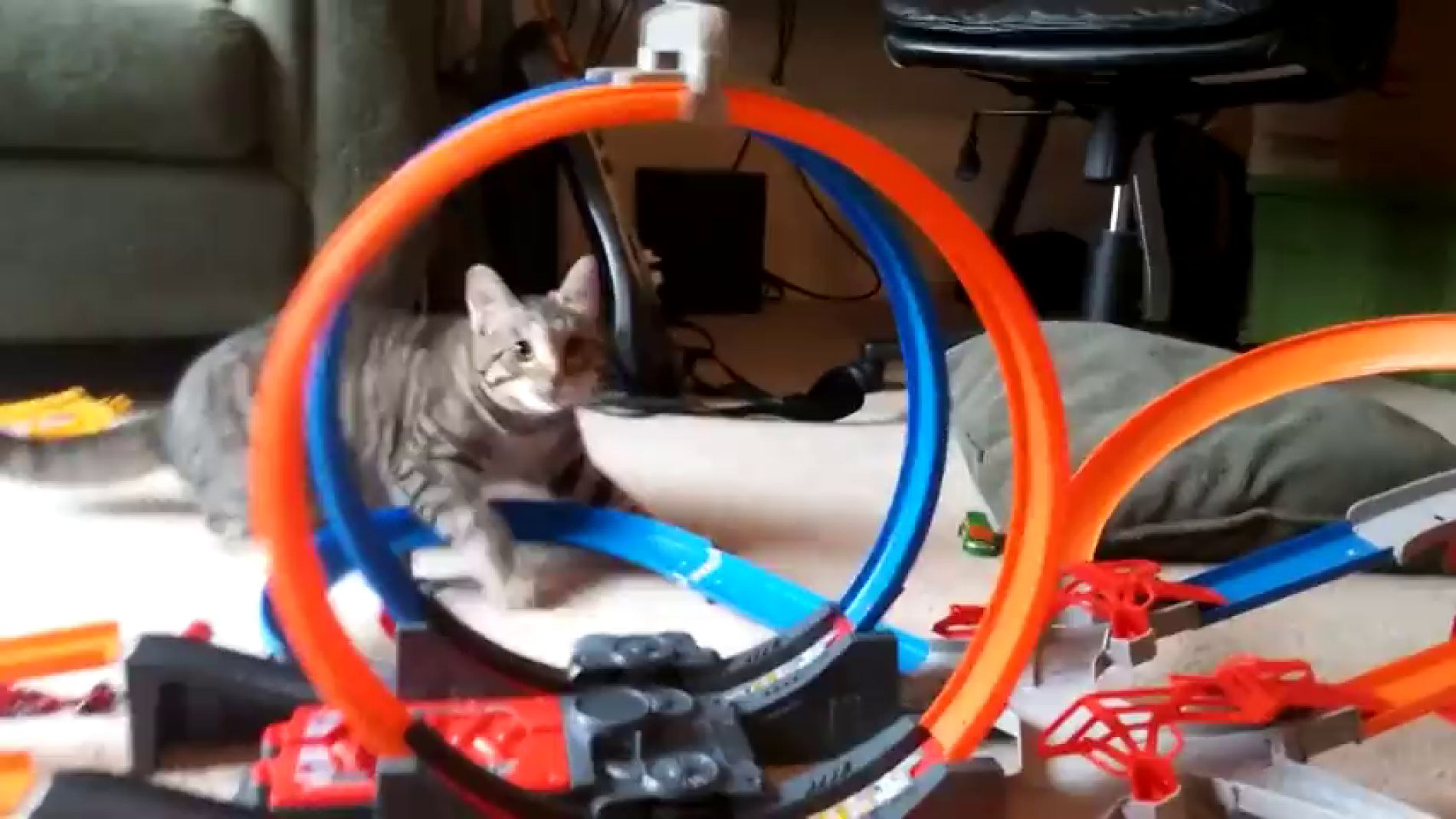 VÍDEO: gato contra coche de juguete, ¿quién gana?