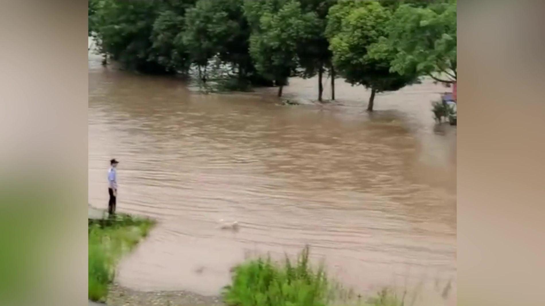 Perrita rescata cachorro en un río