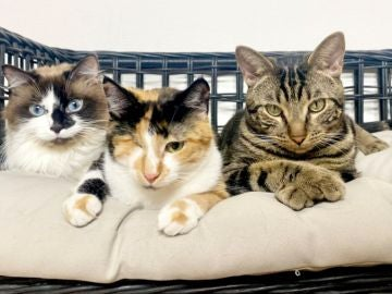 Skye, Millie y Chase, los protagonistas del 'Spaw Day'