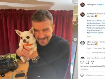 Lucille (mascota de Lolito) y Antonio Banderas