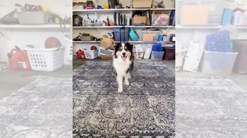 El perro tiktoker