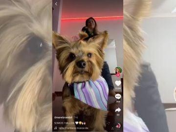 Lola celebrando el millón de seguidores en TikTok