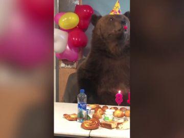 Celebran el cumpleaños de un oso amaestrado y termina sembrando el caos