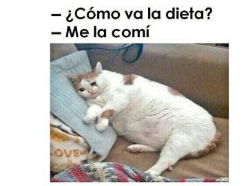 Meme de un gato sobre la dieta