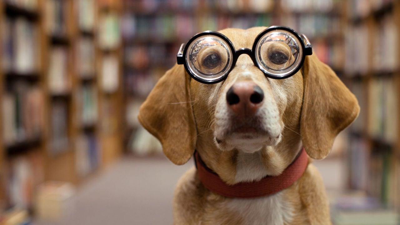 VÍDEO: Este Perro Juega Al Jenga Mejor Que Tú