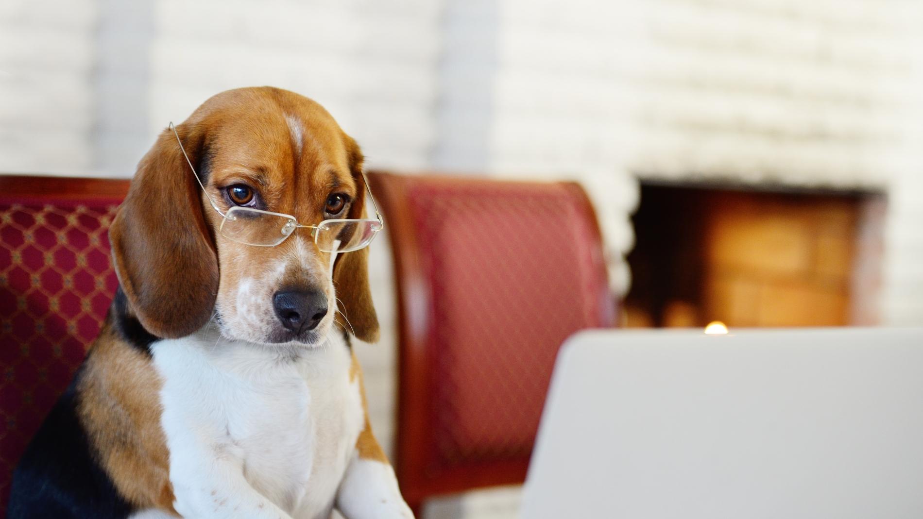 Perro buscando ofertas de pet sitter