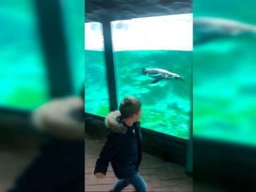 Oliver juega con un pingüino