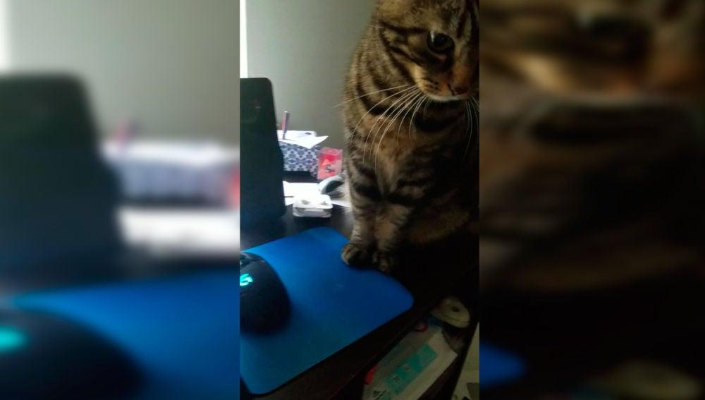 Gato no deja trabajar a su dueño