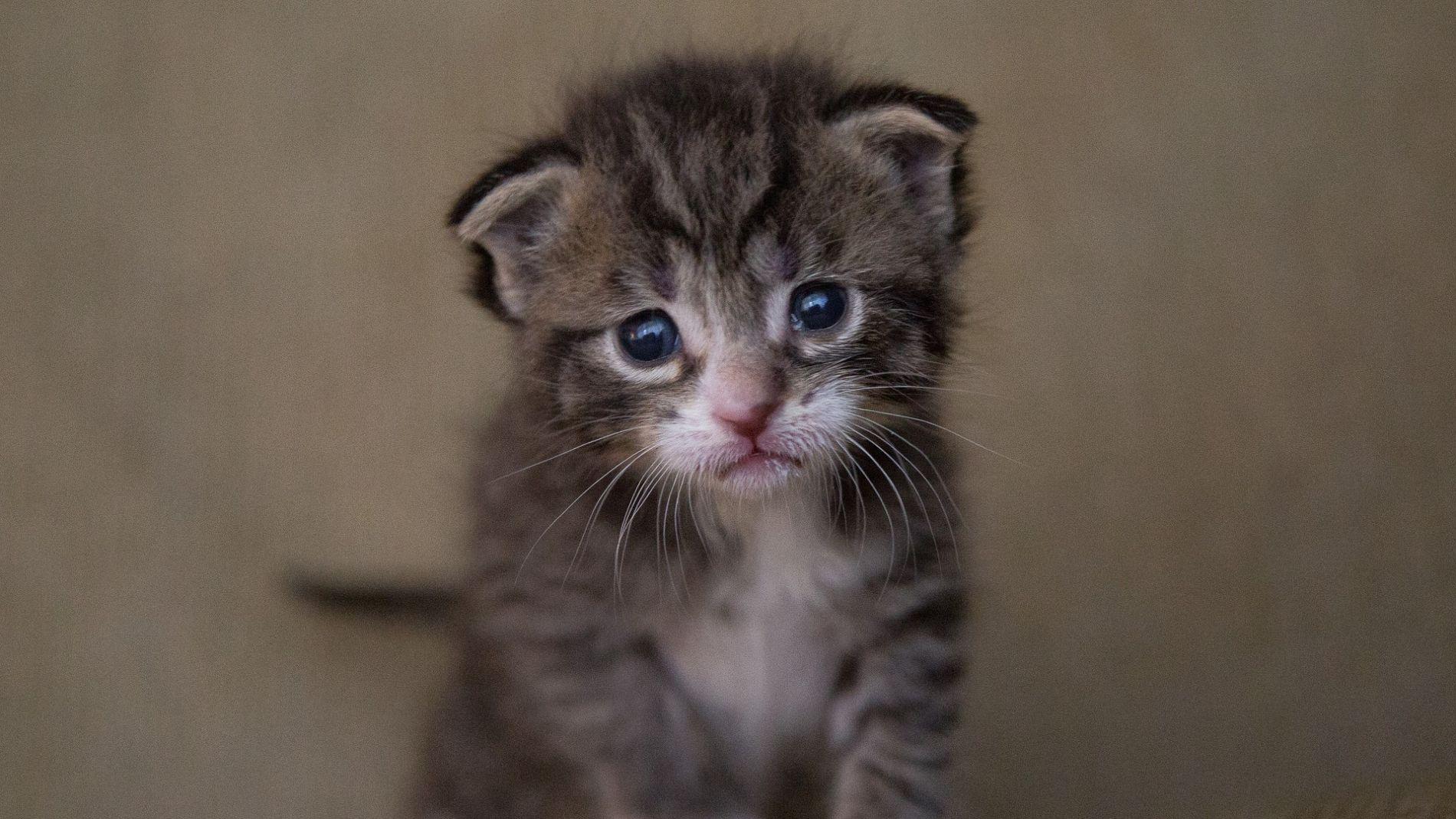 A los gatos mejor no tocarlos en internet