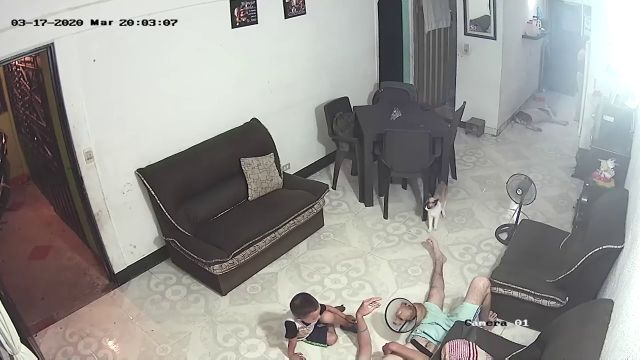 El susto de un niño que creía estar acariciando a su perro