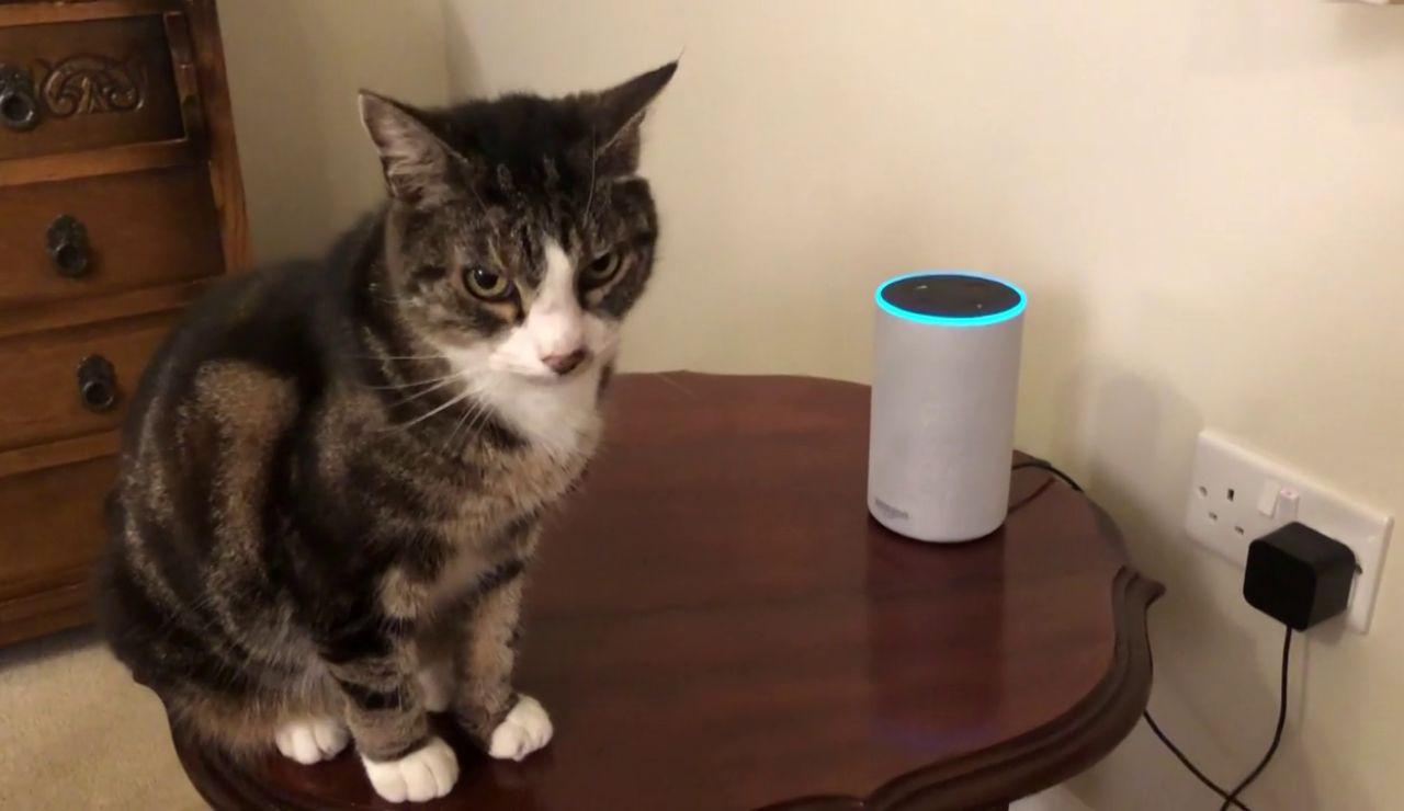 La curiosa reacción de un gato cuando Alexa emite maullidos