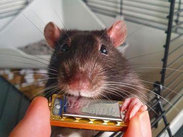 Mr Blik, quizá el roedor con más ritmo